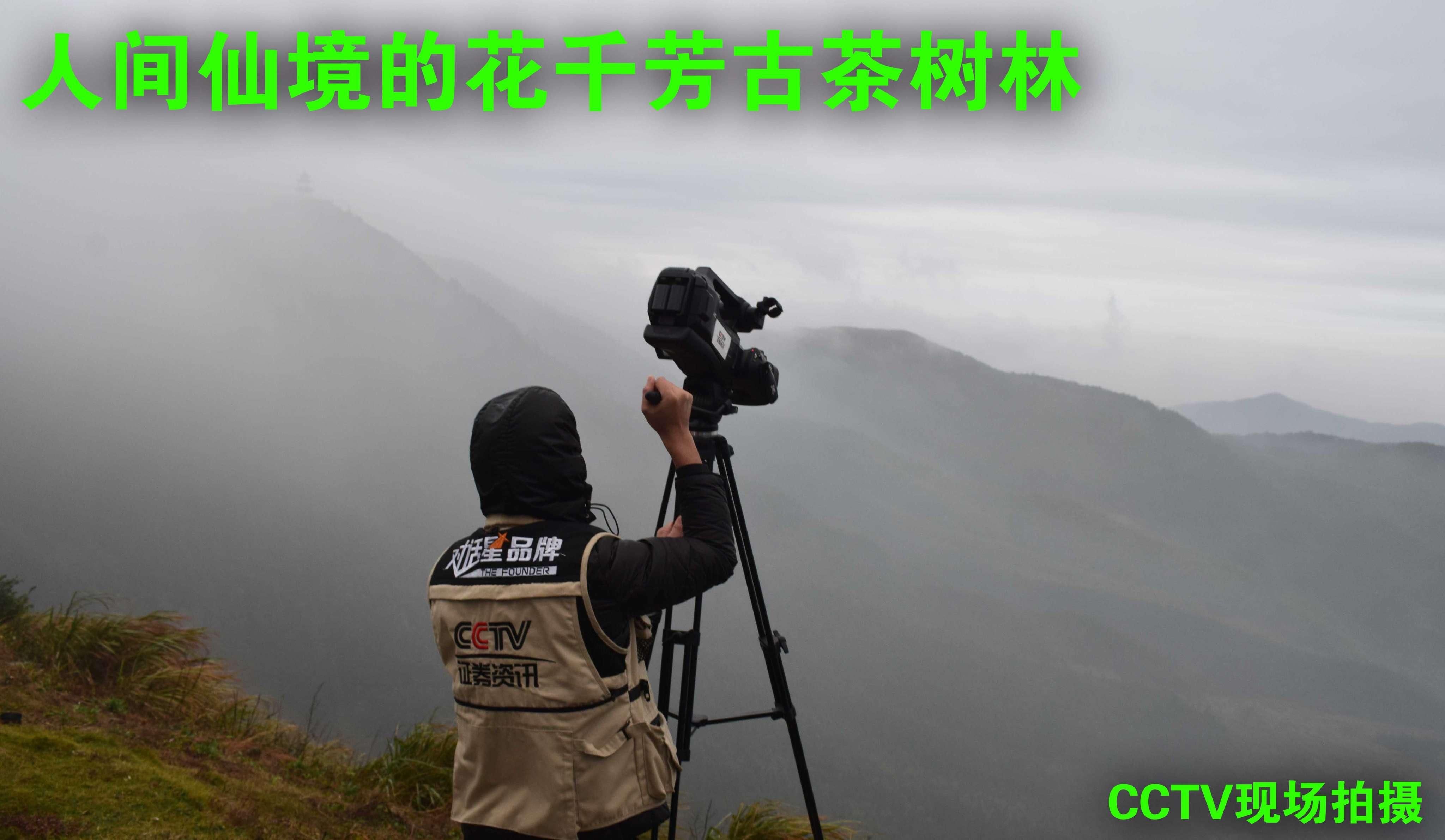 CCTV古茶林中拍攝1.JPG